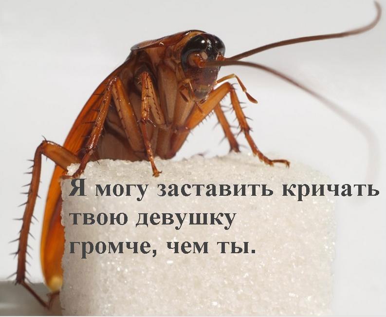 Избавиться от тараканов своими руками 65