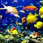 К чему снятся рыбы?