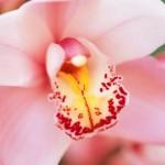 Как правильно ухаживать за орхидеями