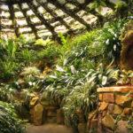 Как создать стильный зимний сад дома?